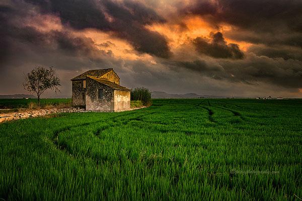 Campos de arroz en la Albufera.