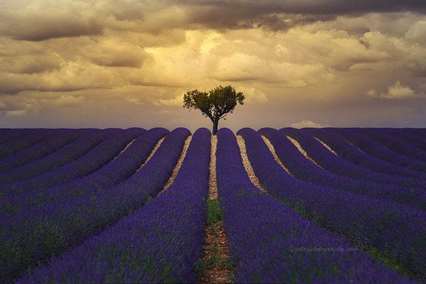 La Provenza, Francia.