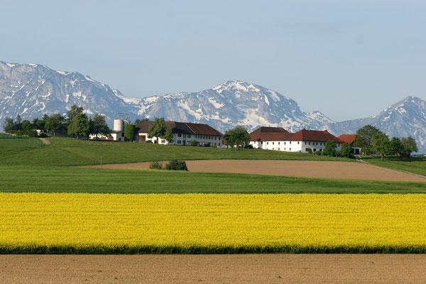 Berg bei Vorchdorf