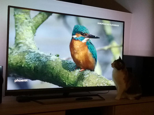 Bild 1: Katze und Eisvogel, 1080 x 810, 94 KB, JPEG