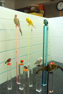 präsentation plexiglas acrylglas