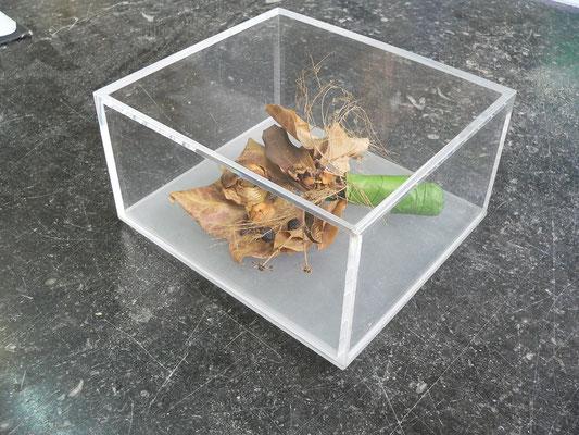 kasten haube acrylglas