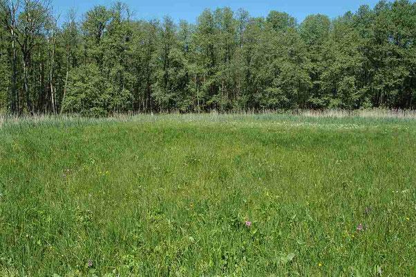 Gemähter Feuchtwiesenbereich