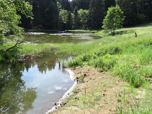 Teich in Fläche 13 mit Erweiterung im Bereich des Zulaufes im Ostteil.