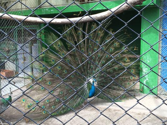 動物園を見学した学生も・・・