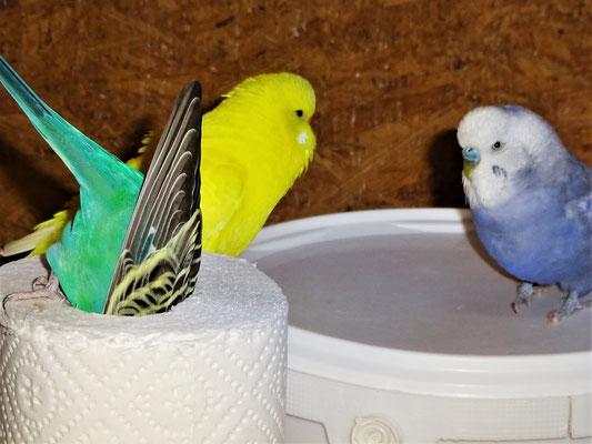 Lotte, Pepe und Monty