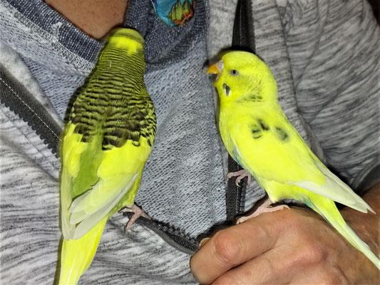 Oscar und Tommy