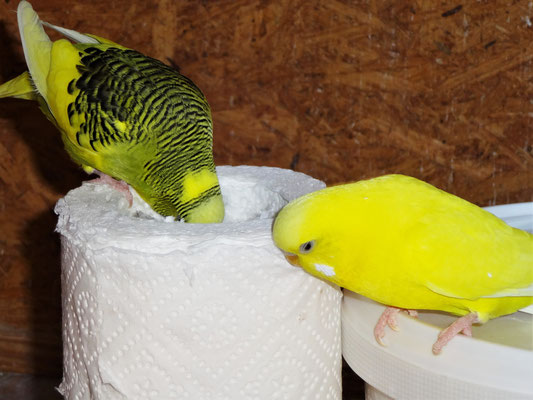 Oscar und Pepe