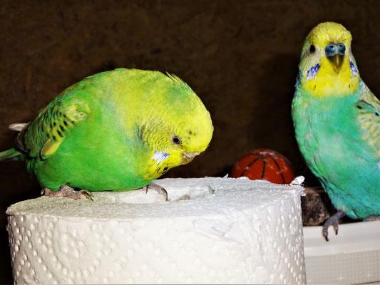 Feli und Flo