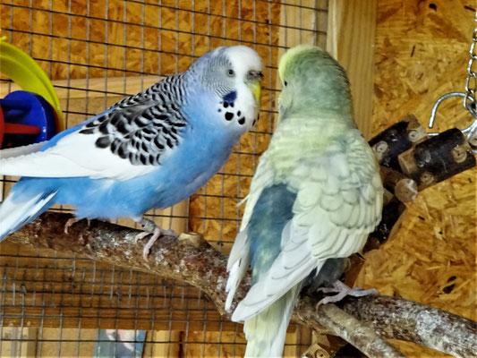 Joline und Leroy