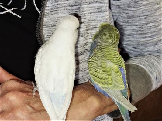 Vergil und Tini