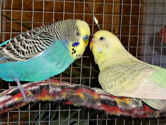 """Jordy:"""" Flocki, ich lieb doch nur Dich, Du bist meine Herzallerliebste!!!"""""""