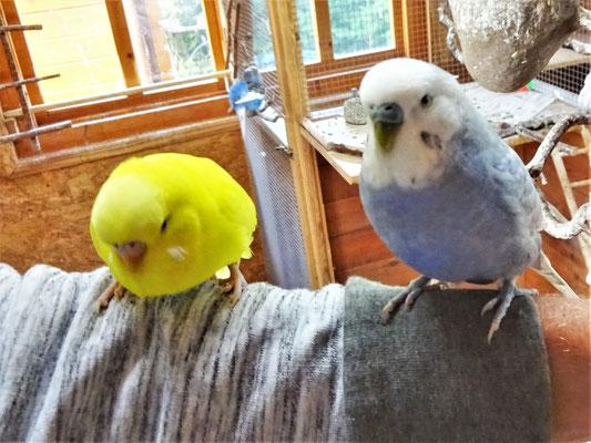 Pepe und Monty