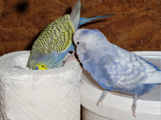 Tini und Monty