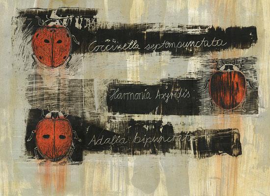 cocinella, 2018, 70 x 45 cm, Bienenwachs auf Papier