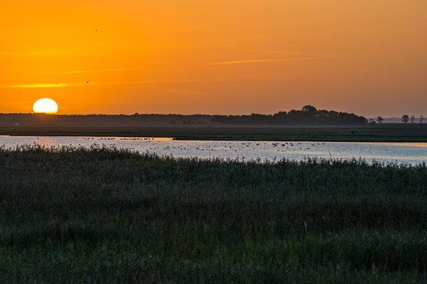 Darß, Ostsee. Sonnenaufgang mit Kranichkonzert