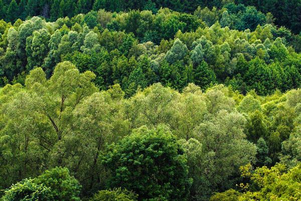 Brodowiner Wald, Uckermark