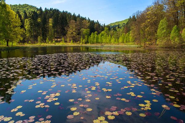 Pfälzer Waldsee
