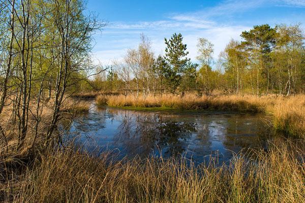 Moor in Niedersachsen
