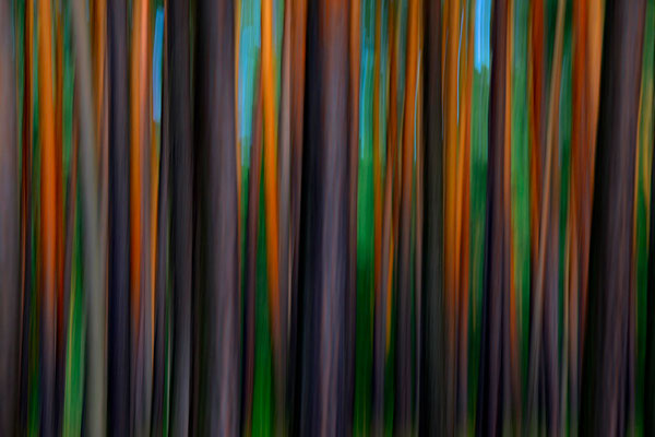 Im Wald 3 (m)