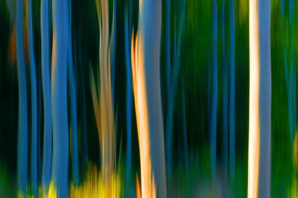 Im Wald 4