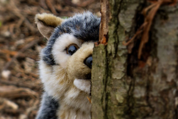 37. Tag: Brüderchen Wolf - mein Lieblingsbild eines Timber-Wolfs ist 'Brother Wolf' von Jim Brandenburg