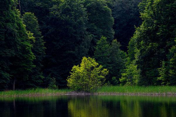 Buchenwald Grumsiner Forst, UNESCO-Biosphärenreservat Schorfheide - Chorin
