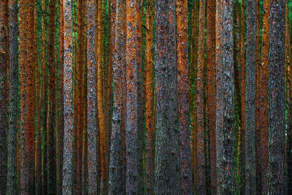 Vor lauter Bäumen ist kein Wald zu sehen, Brandenburg