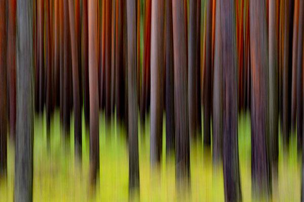 Im Wald 2 (m)