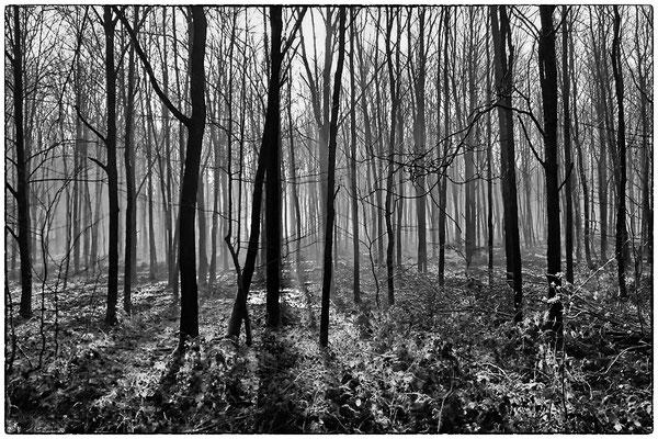 Bentheimer Wald, Handy-Foto, 2016