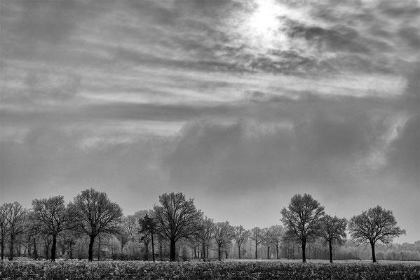 Gildehauser Venn Winter 2017