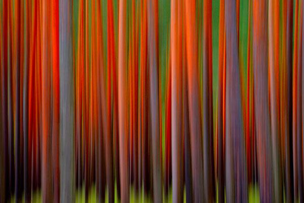 Im Wald 1 (m)