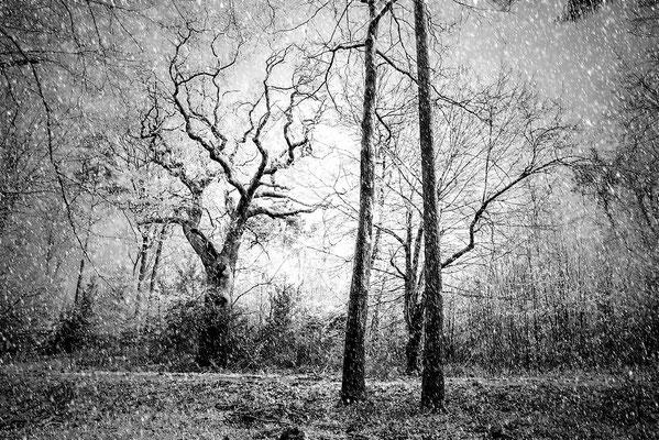 Bentheimer Wald, 2015