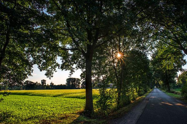 """""""Waldseite"""" Bentheim, 2016"""