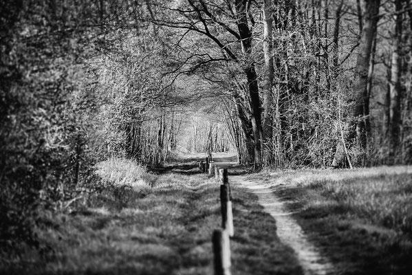 Gildehauser Venn Grenzweg