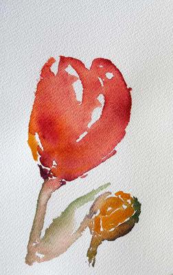 Tulipe du Keukenhof