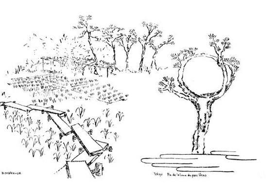 jardin de Koishikawakoraku-en et pin de la lune au parc Ueno à Tokyo
