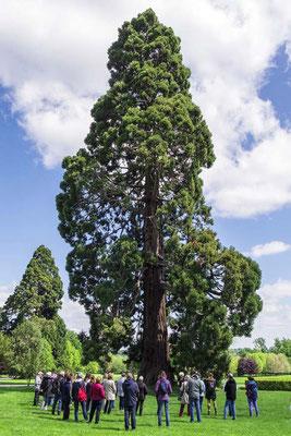 Dialogue avec l'arbre - parc de Rentilly