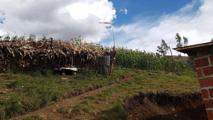 Das Maisfeld der Familie