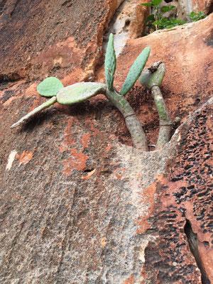 Origineller Kaktus in einer Nische.