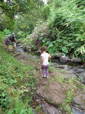 Chemin au bord d'un ruisseau venant d'une cascade
