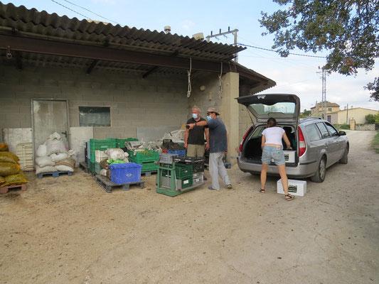 Les particuliers apportent leur récolte d'olives pour obtenir l'huile de leurs olives