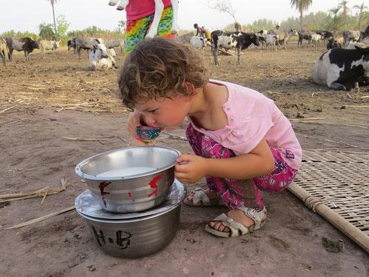 Yaëlle se régale de lait cru tout frais.