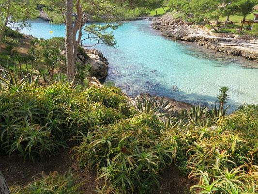 Les abords de la Cala Mitjana sont une propriété privée traversée par un chemin public. Les bords du chemin sont aménagés et plantés d'aloe, de cactus, etc..