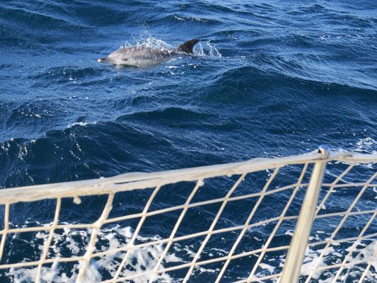 Les dauphins, on ne s'en lasse pas