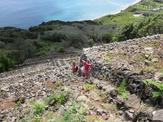 Des parcelles de vigne en terrasse au dessus de Praia Formosa