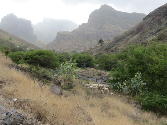 Vallée de Faja