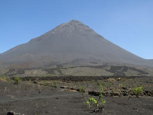 Au pied du volcan, les traces de la coulée de lave de 2014.