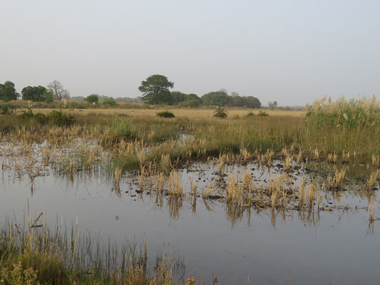 Terres cultivables entre le fleuve et le village. En saison des pluies, l'eau devient douce et le riz ainsi que d'autres céréales sont cultivés