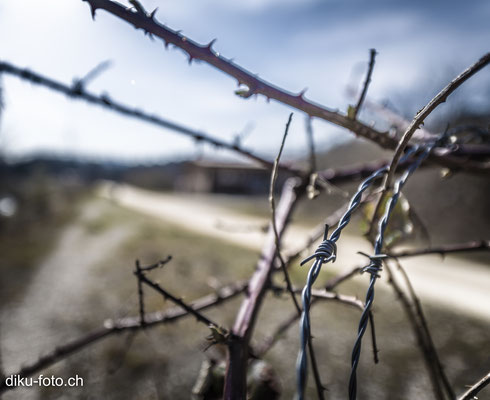 Faces of barbed wire by Dieter Kueng